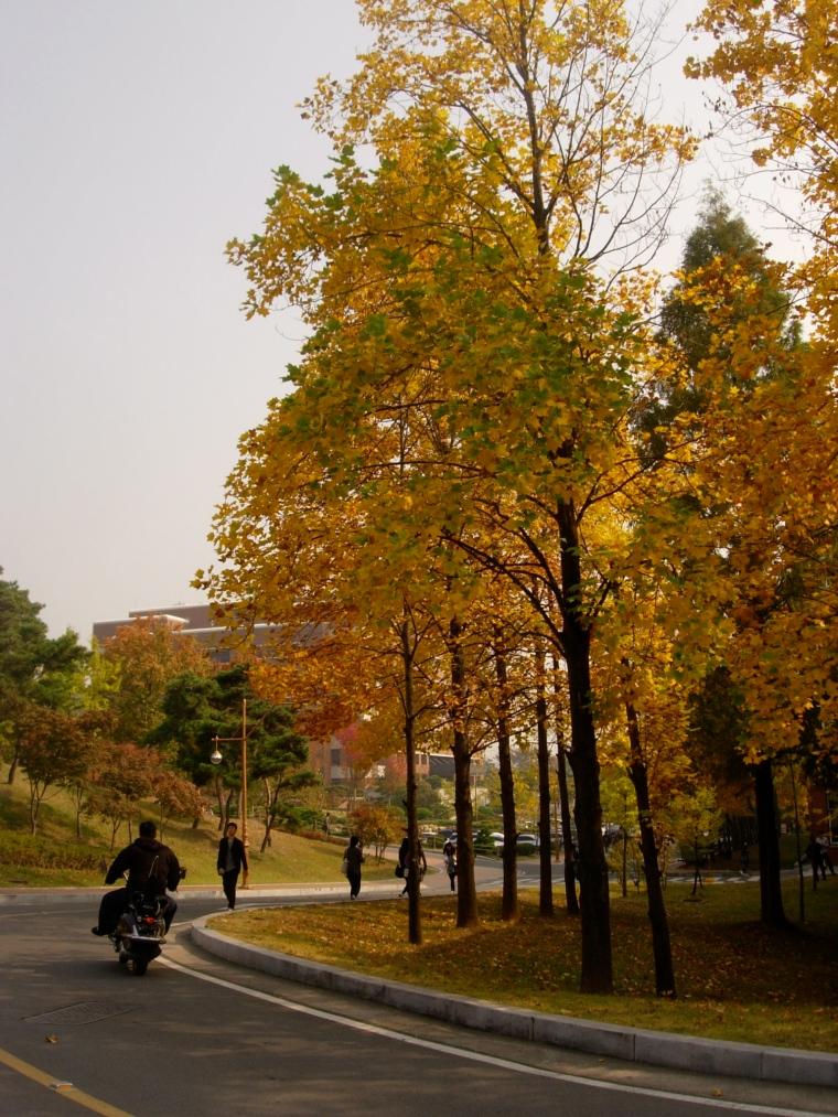 Ginko & Motorcyle - Keimyung University