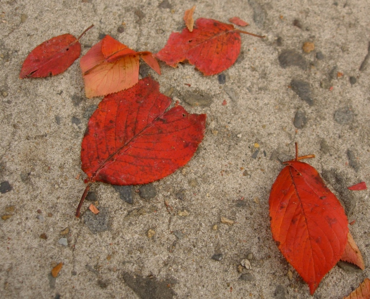 Red on Concrete