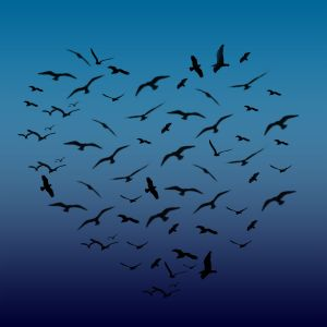heart-shaped-birds-1146008-m